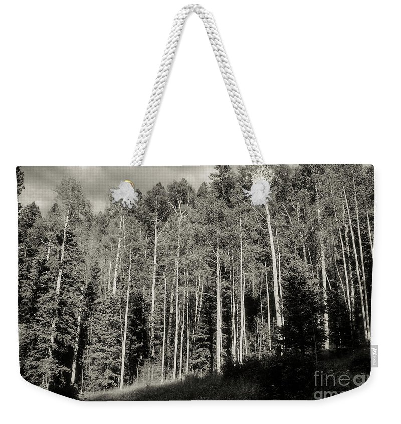 Pioneer Canyon Trail Weekender Tote Bag featuring the photograph White-barked Birch Forest 3 by Bob Phillips