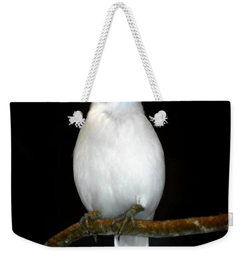 Bird Weekender Tote Bag featuring the photograph White Bird by Anthony Jones