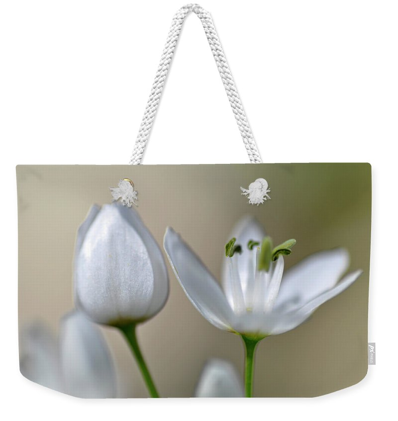 Lachish Weekender Tote Bag featuring the photograph White Blossom 1 by Dubi Roman