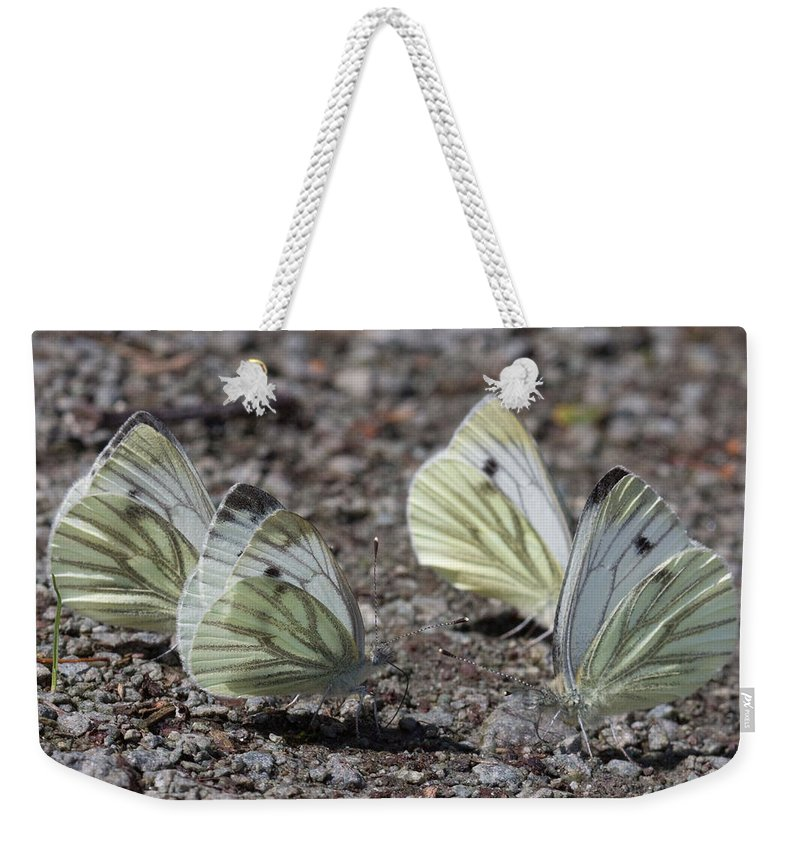 Butterfly Weekender Tote Bag featuring the photograph White Butterflies by Bob Kemp