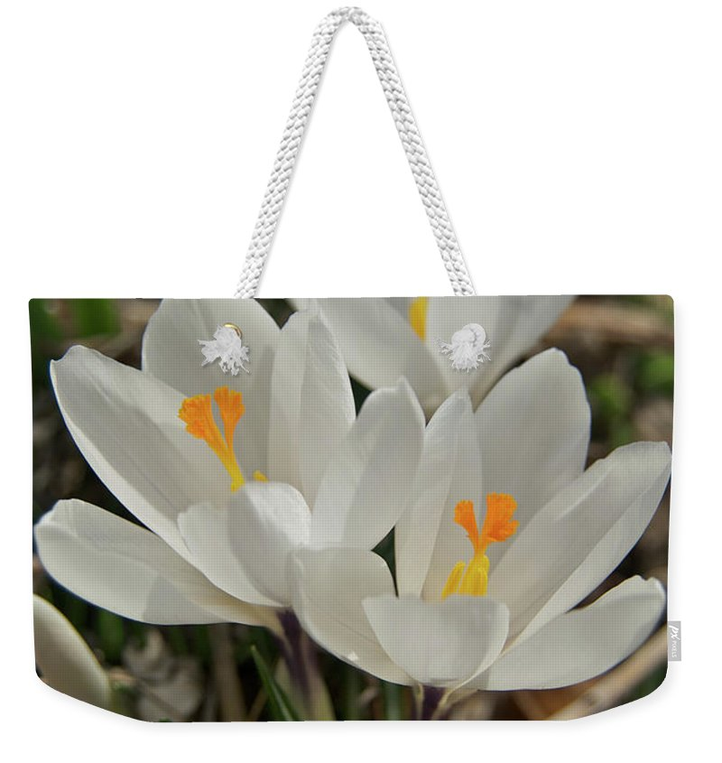 Crocus Weekender Tote Bag featuring the photograph White Crocuses by Michael Peychich