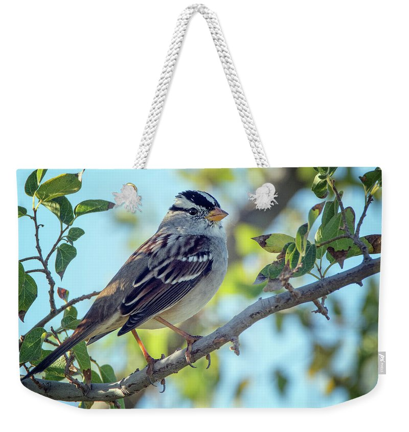 White-crowned Sparrow Weekender Tote Bag featuring the photograph White-crowned Sparrow 0033-111017-1cr by Tam Ryan