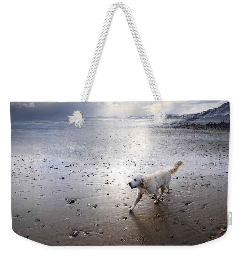 Aqua Weekender Tote Bag featuring the photograph White Dog by Svetlana Sewell