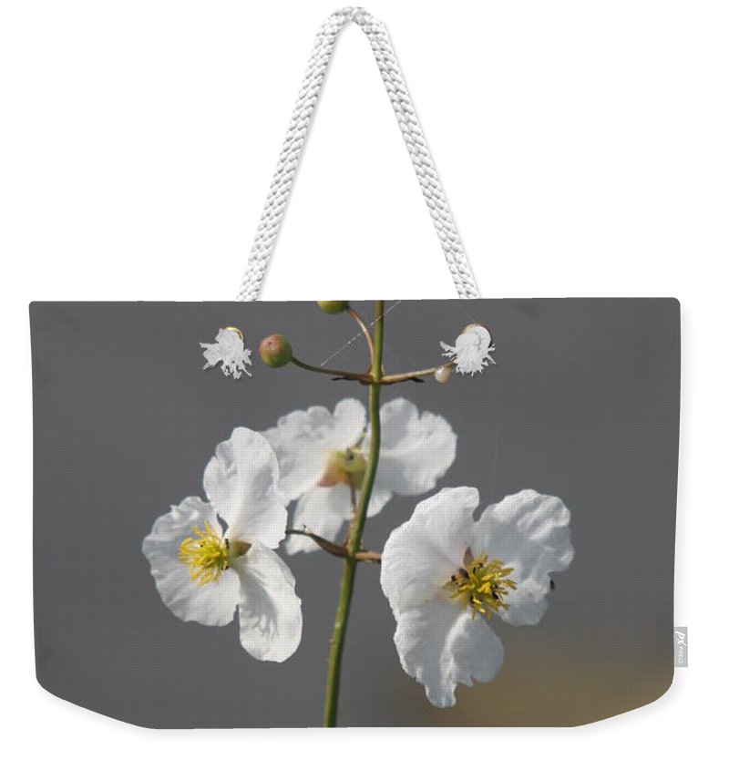Flowers Weekender Tote Bag featuring the photograph White Flower by Christiane Schulze Art And Photography