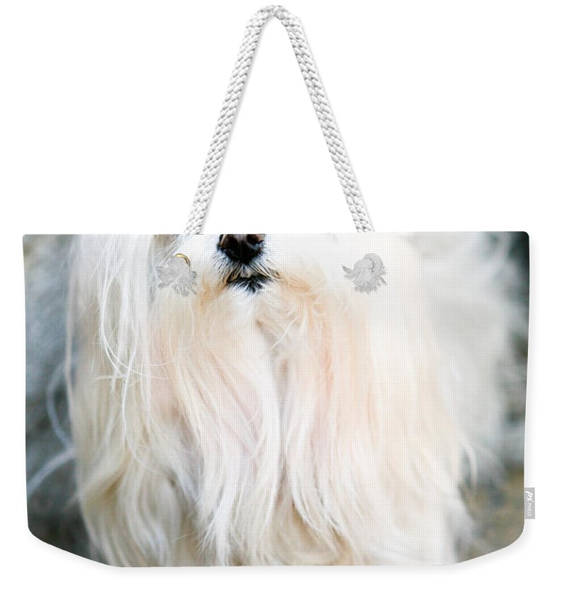 Small Weekender Tote Bag featuring the photograph White Fluff by Marilyn Hunt