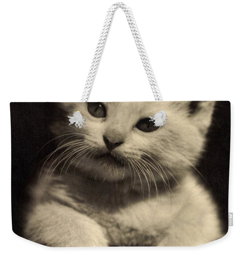 Cat Weekender Tote Bag featuring the photograph White Fluffy Kitten by German School