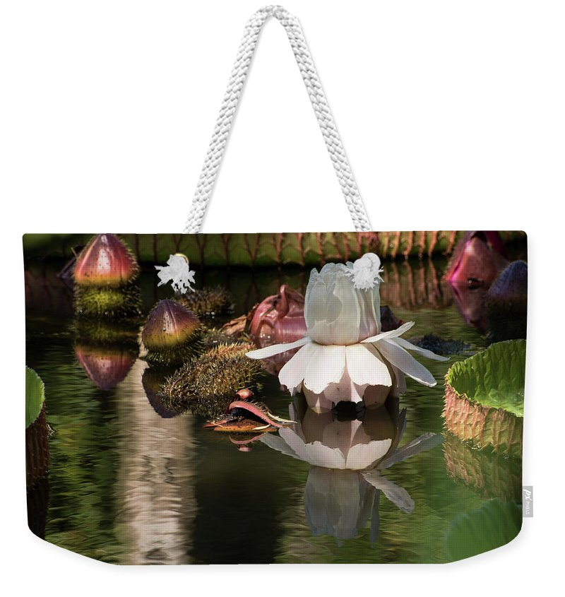 Giant Water Lily Weekender Tote Bag featuring the photograph White Giant Water Lily by Zina Stromberg