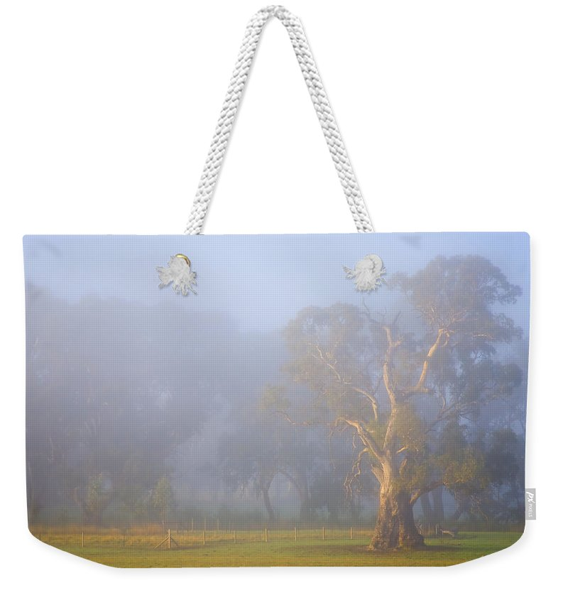 Tree Weekender Tote Bag featuring the photograph White Gum Morning by Mike Dawson