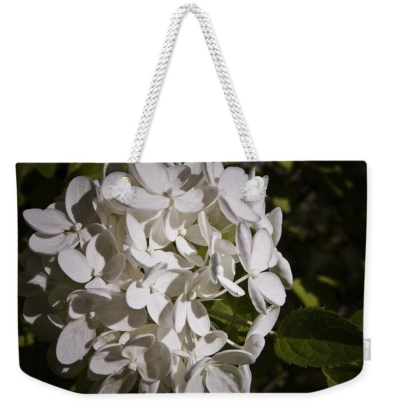 Hydrangea Weekender Tote Bag featuring the photograph White Hydrangea Bloom by Teresa Mucha