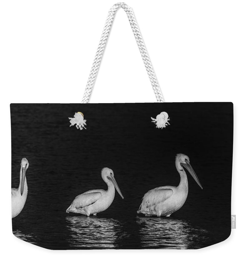 Floride Weekender Tote Bag featuring the photograph White Pelicans by Marie Elise Mathieu