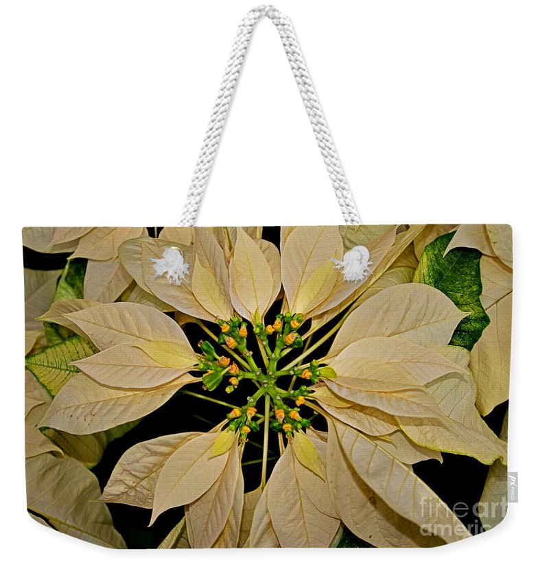 Christmas Weekender Tote Bag featuring the photograph White Poinsettia by Rich Walter