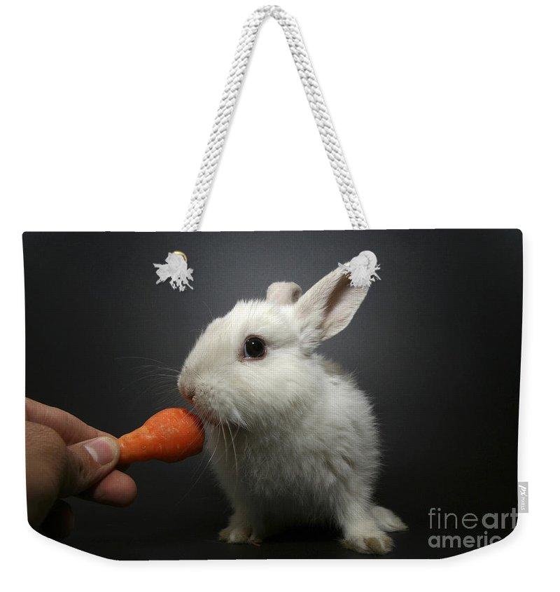 White Weekender Tote Bag featuring the photograph White Rabbit by Yedidya yos mizrachi