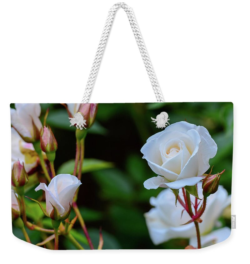 Rose Roses White Bloom Flower Flowers Garden Weekender Tote Bag featuring the photograph White Roses by Clyn Robinson