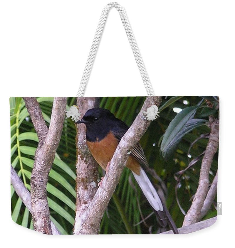Black Birds Weekender Tote Bag featuring the photograph White Rumped Shama by Mary Deal
