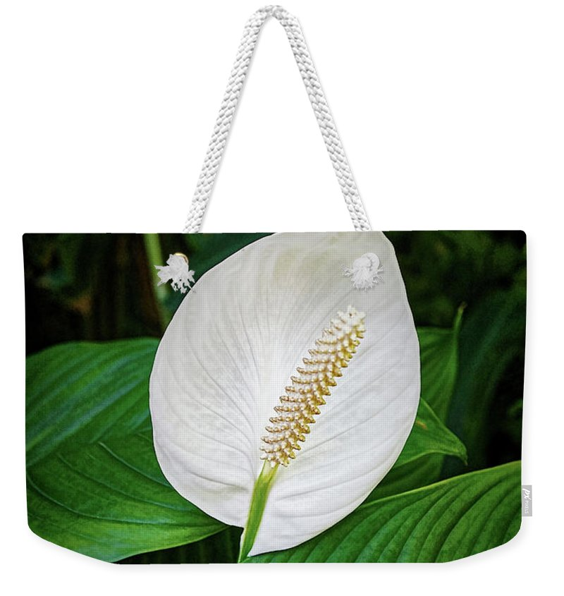 Tail Flower Weekender Tote Bag featuring the photograph White Tail-flower by Kenneth Roberts