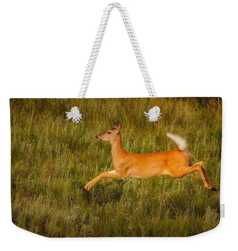 Animals Weekender Tote Bag featuring the photograph White-tailed Doe Leaping by Rikk Flohr