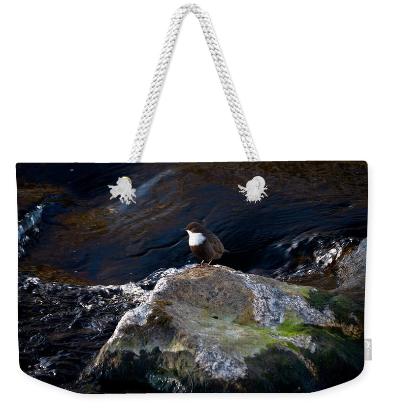 Lehtokukka Weekender Tote Bag featuring the photograph White-throated Dipper Nr 1 by Jouko Lehto
