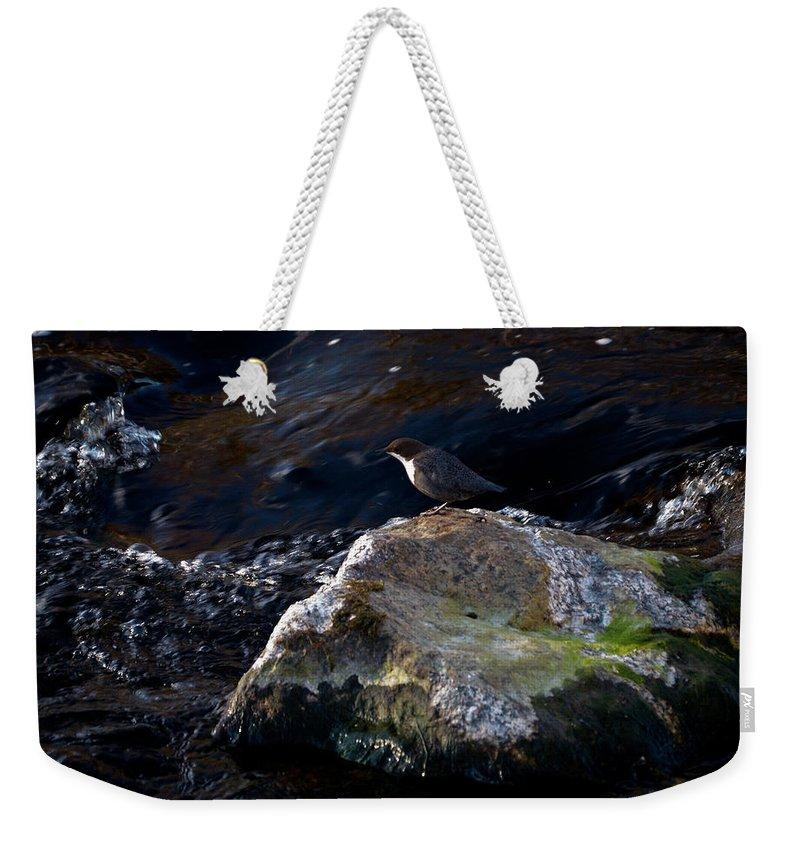 Lehtokukka Weekender Tote Bag featuring the photograph White-throated Dipper Nr 2 by Jouko Lehto