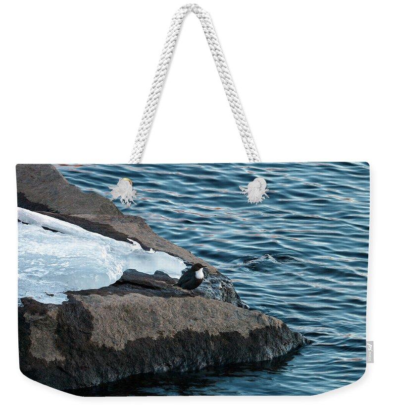 Lehtokukka Weekender Tote Bag featuring the photograph White-throated Dipper Nr 3 by Jouko Lehto
