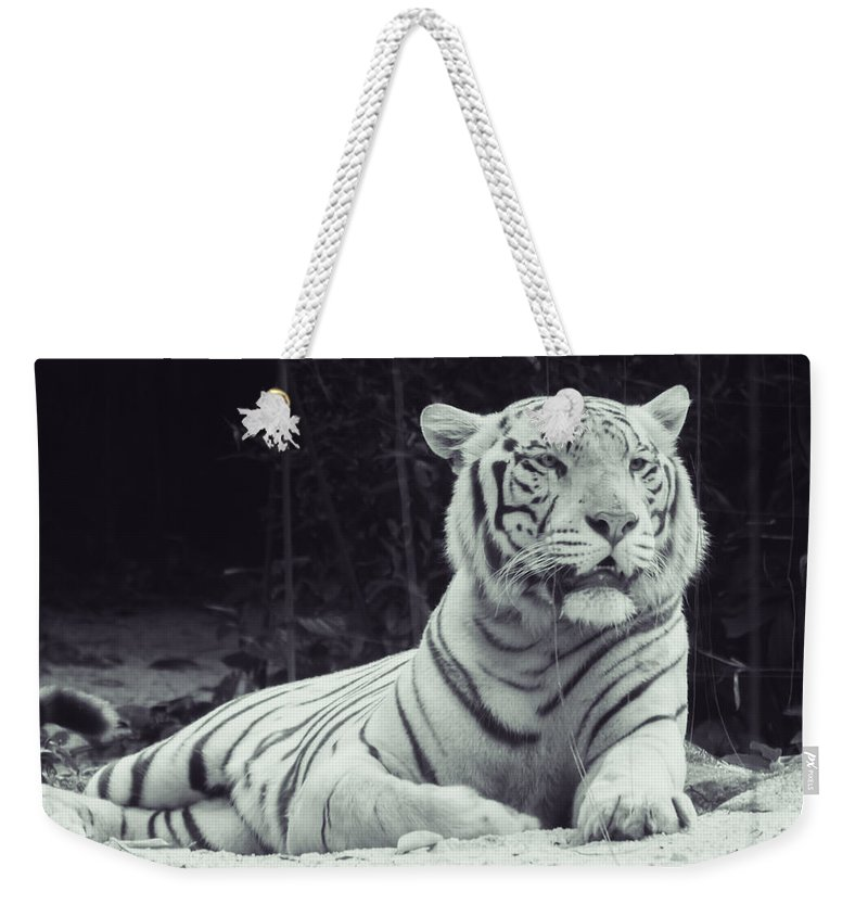 Animal Weekender Tote Bag featuring the photograph White Tiger 16 by Jijo George