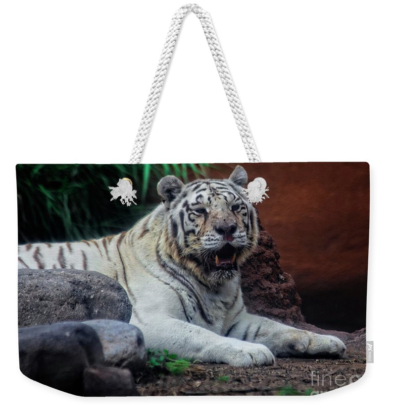 Animal Weekender Tote Bag featuring the photograph White Tiger Gladys Porter Zoo Texas by TN Fairey