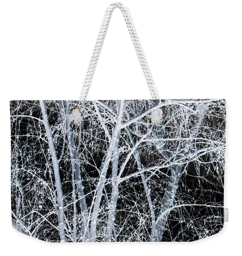 White Tree Black Night Weekender Tote Bag featuring the photograph White Tree Black Night by Heather Joyce Morrill