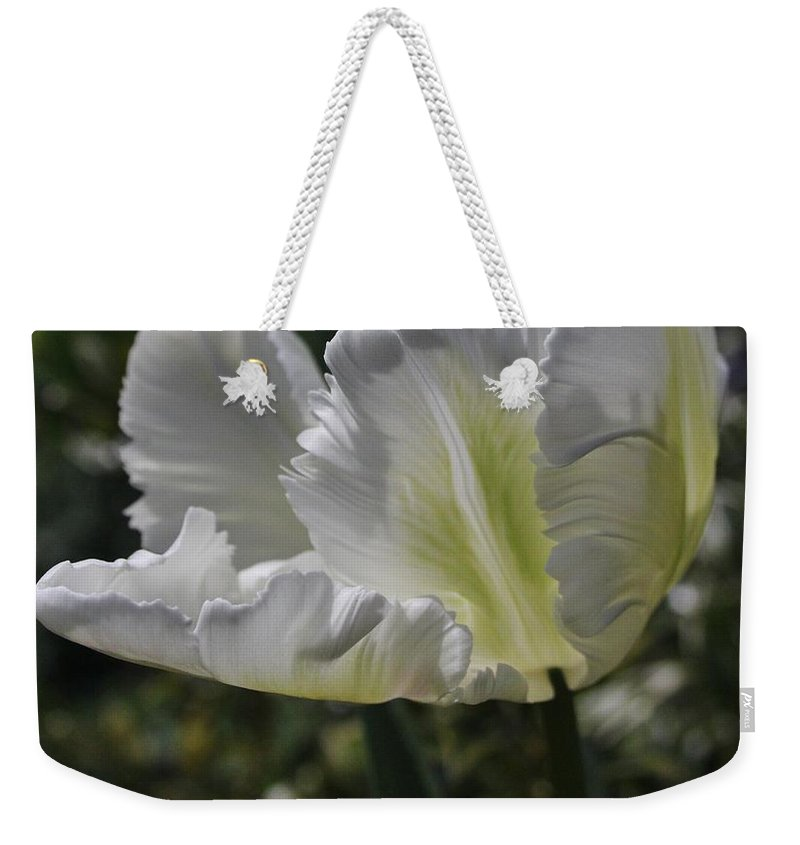 Tulip Weekender Tote Bag featuring the photograph White Tulip 1 by Mo Barton