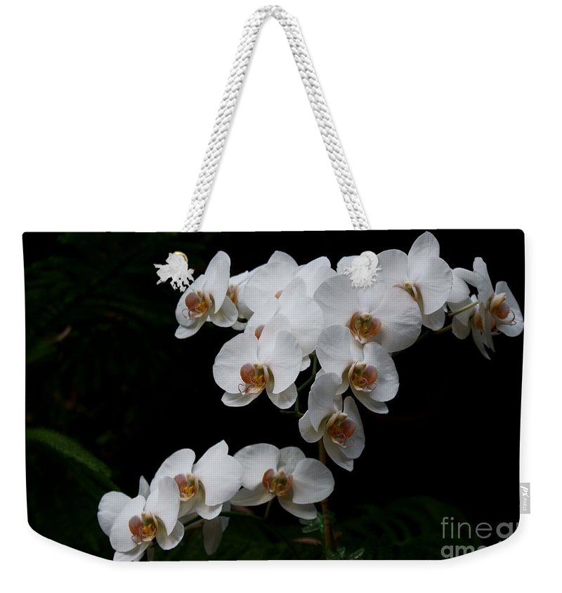 Phylanopsis Orchid Weekender Tote Bag featuring the photograph White Velvet by Joanne Smoley