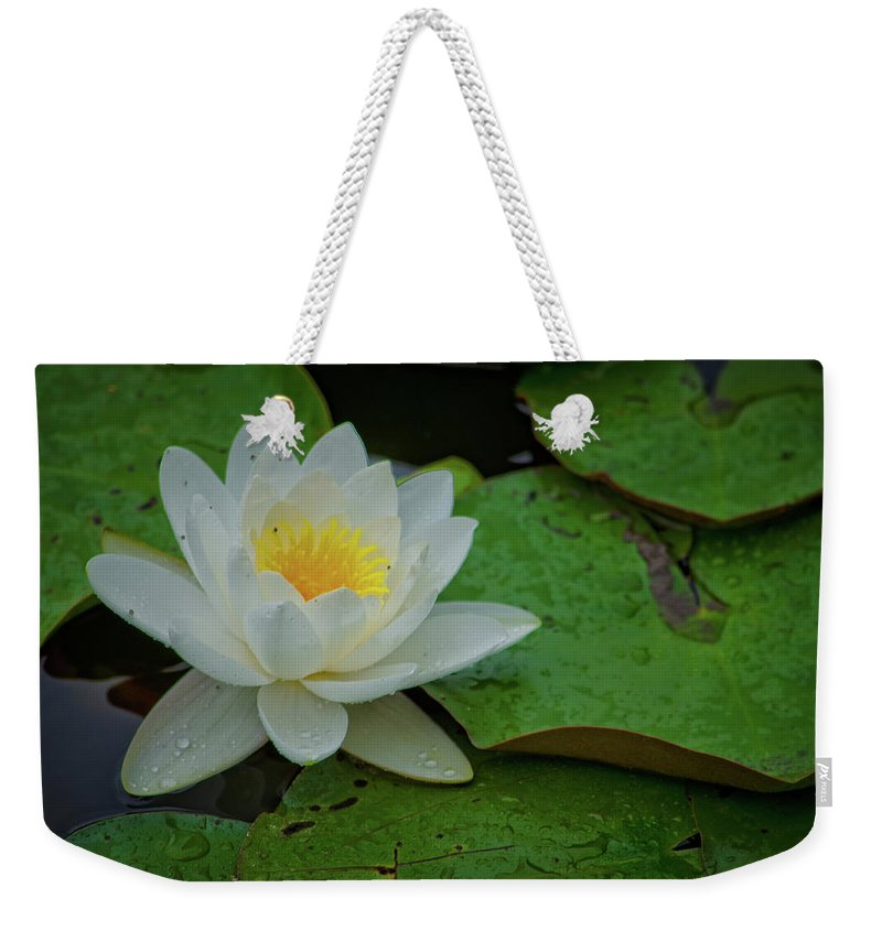 Waterlily Weekender Tote Bag featuring the photograph White Water Lily by Ina Kratzsch