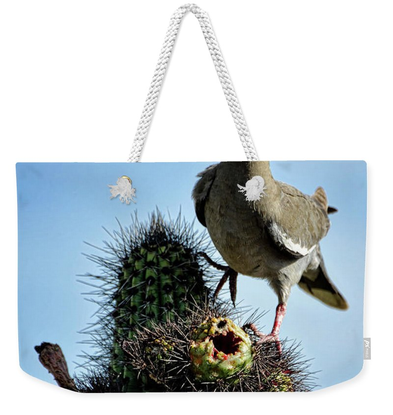 White Winged Dove Weekender Tote Bag featuring the photograph White Winged Dove by Saija Lehtonen