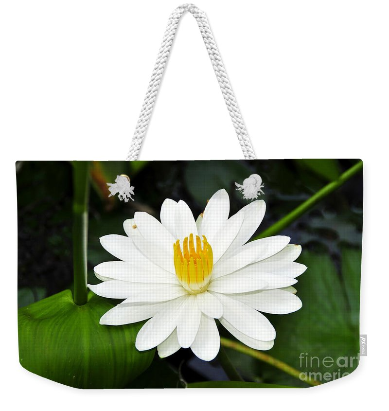 White Weekender Tote Bag featuring the photograph White Wonder by David Lee Thompson