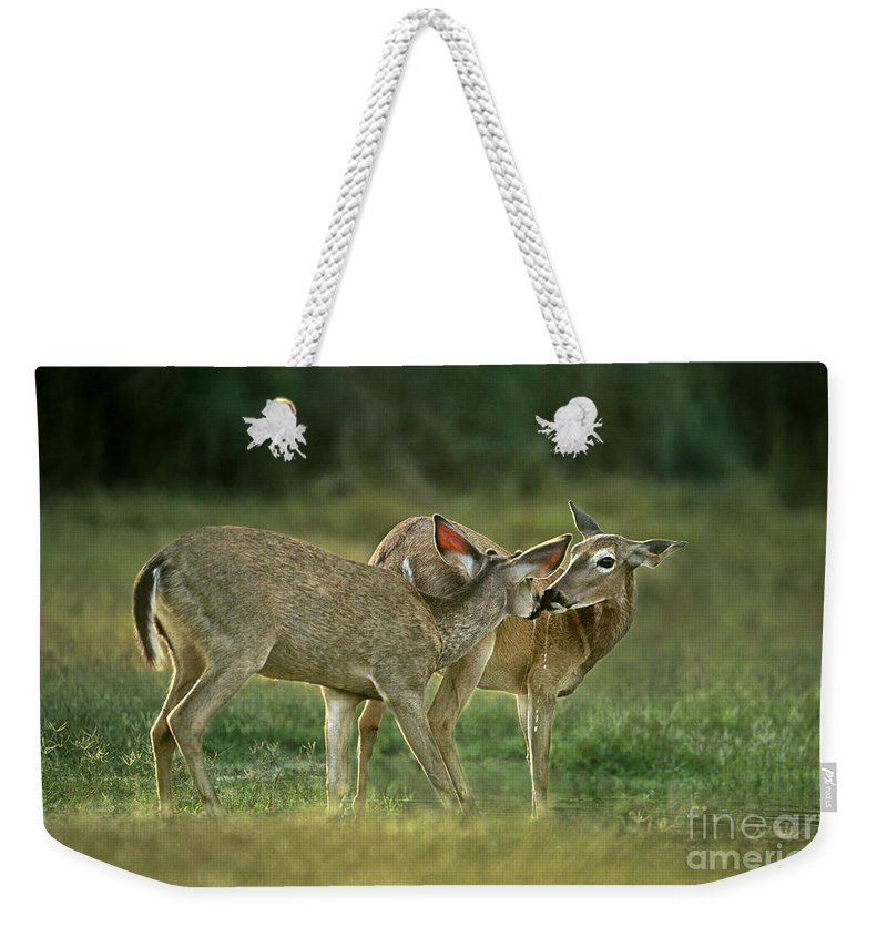 North America Weekender Tote Bag featuring the photograph Whitetail Deer Share An Initmate Moment Texas Wildlife by Dave Welling