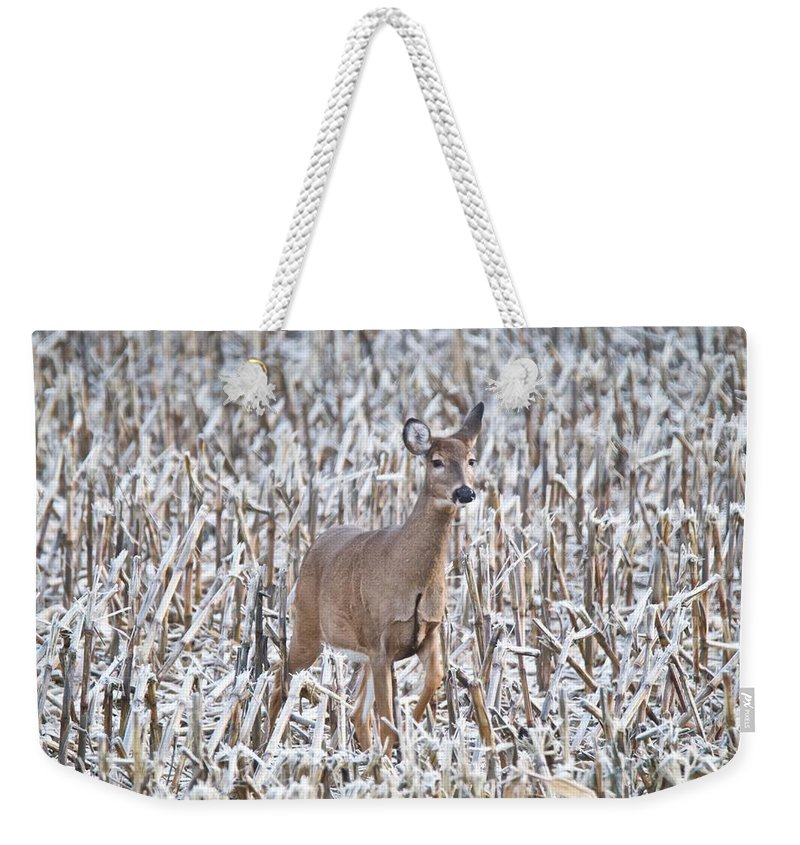 Deer Weekender Tote Bag featuring the photograph Whitetail In Frosted Corn 537 by Michael Peychich