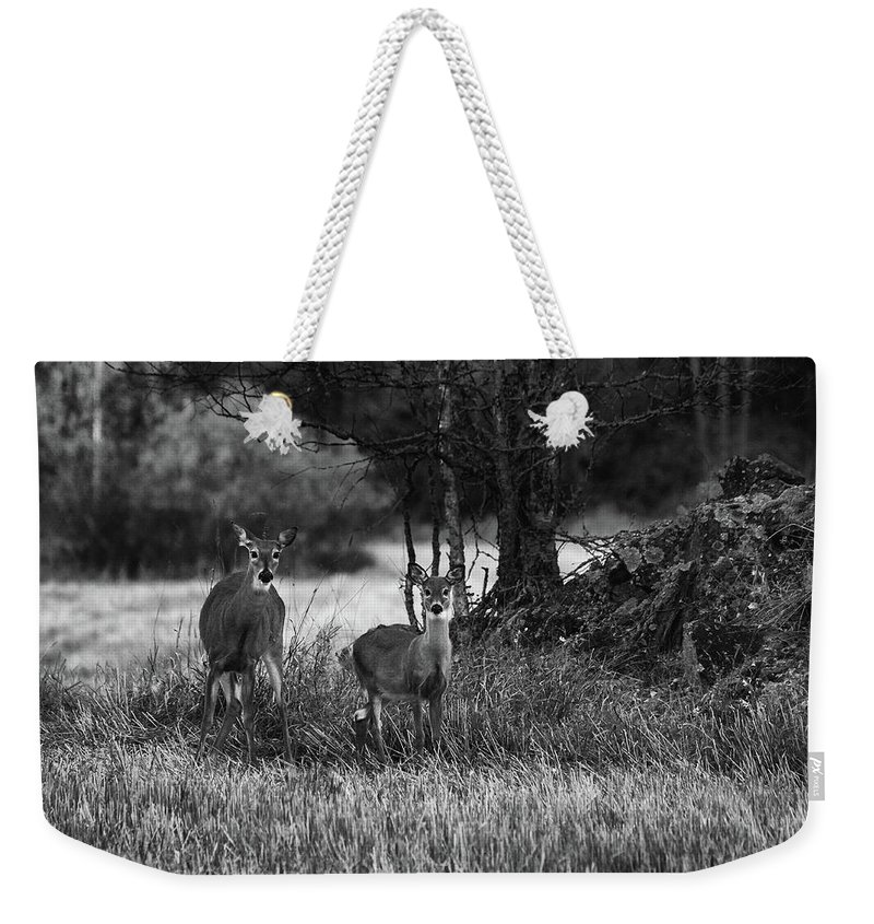 Finland Weekender Tote Bag featuring the photograph Whitetailed Deers by Jouko Lehto