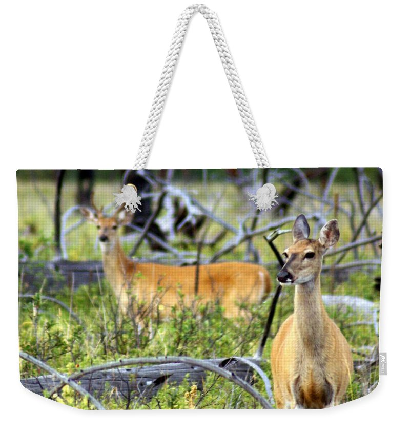 Deer Weekender Tote Bag featuring the photograph Whitetails by Marty Koch