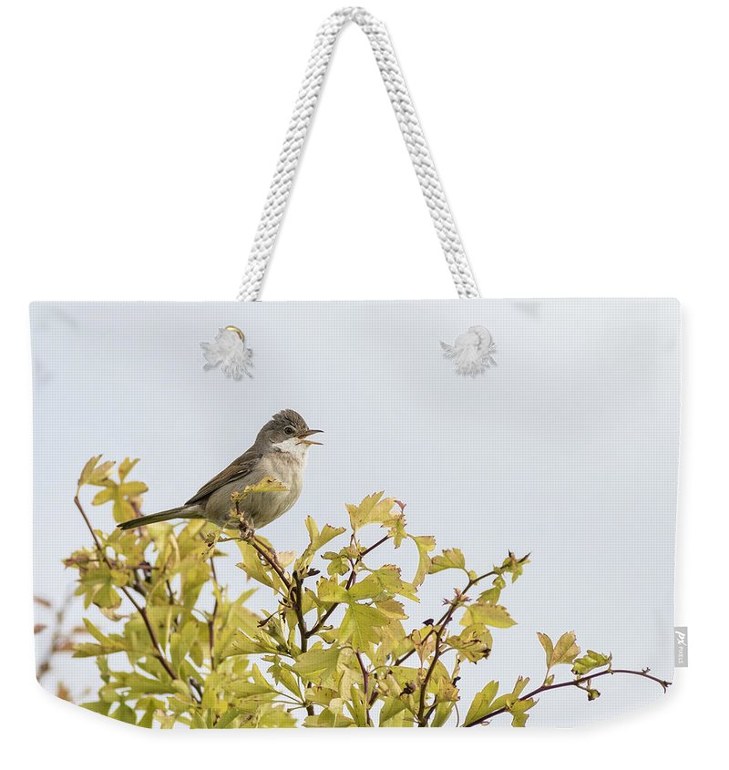 Whitethroat Weekender Tote Bag featuring the photograph Whitethroat by Chris Smith