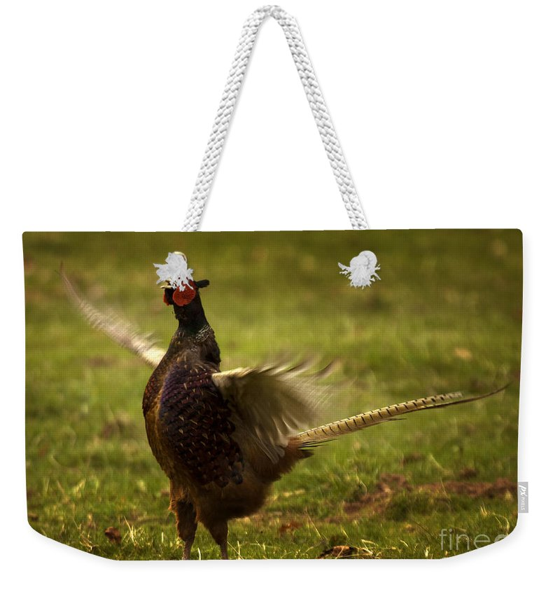 Pheasant Weekender Tote Bag featuring the photograph Who Is The Boss by Angel Ciesniarska