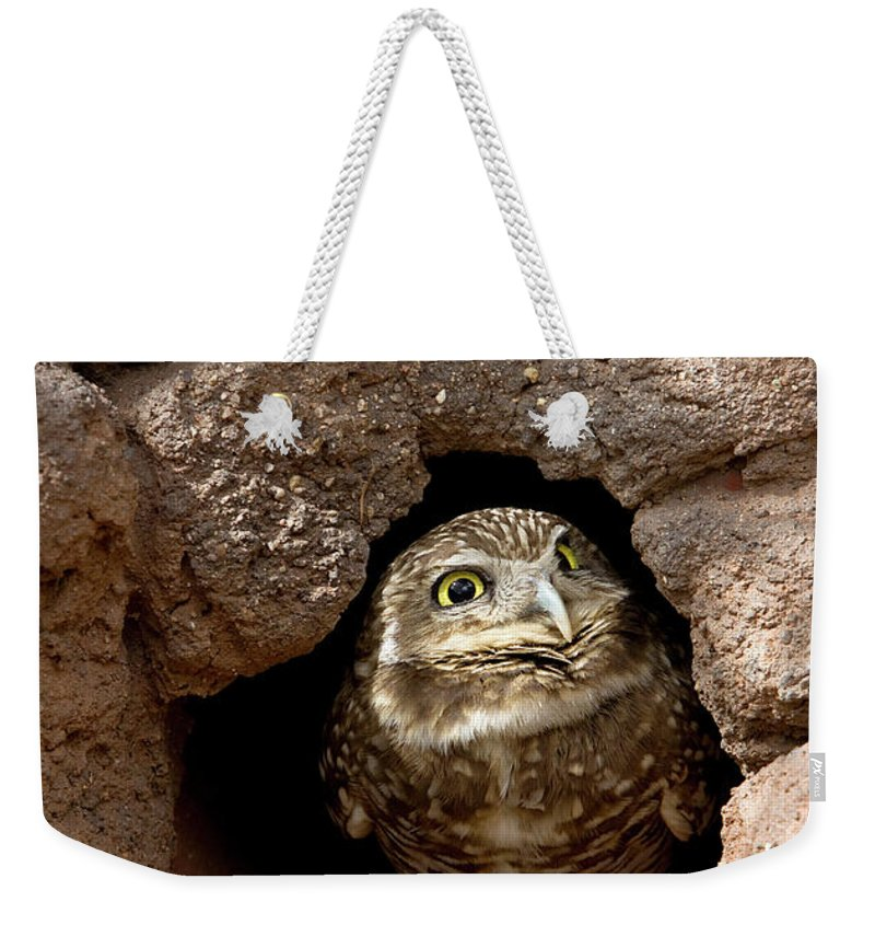 Owl Weekender Tote Bag featuring the photograph Who's There by Phyllis Denton
