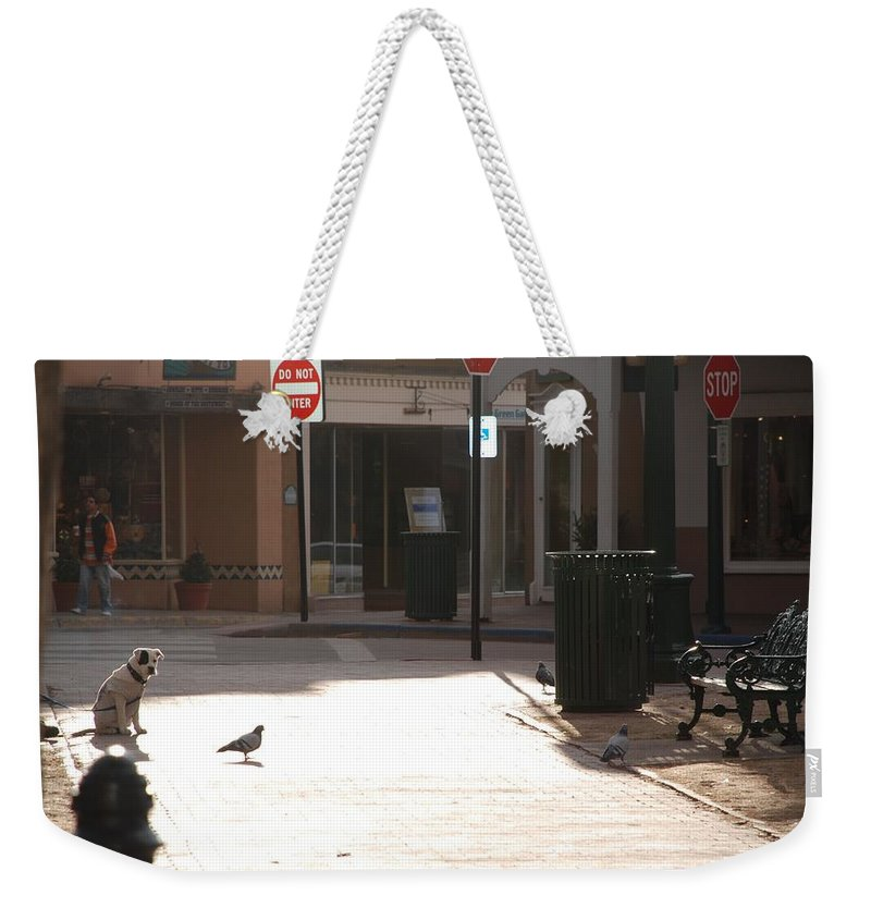 Dog Weekender Tote Bag featuring the photograph Why Question Mark by Rob Hans