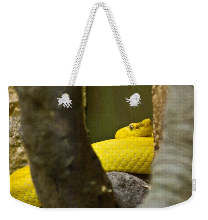 Yellow Weekender Tote Bag featuring the photograph Wicked Snake by Douglas Barnett
