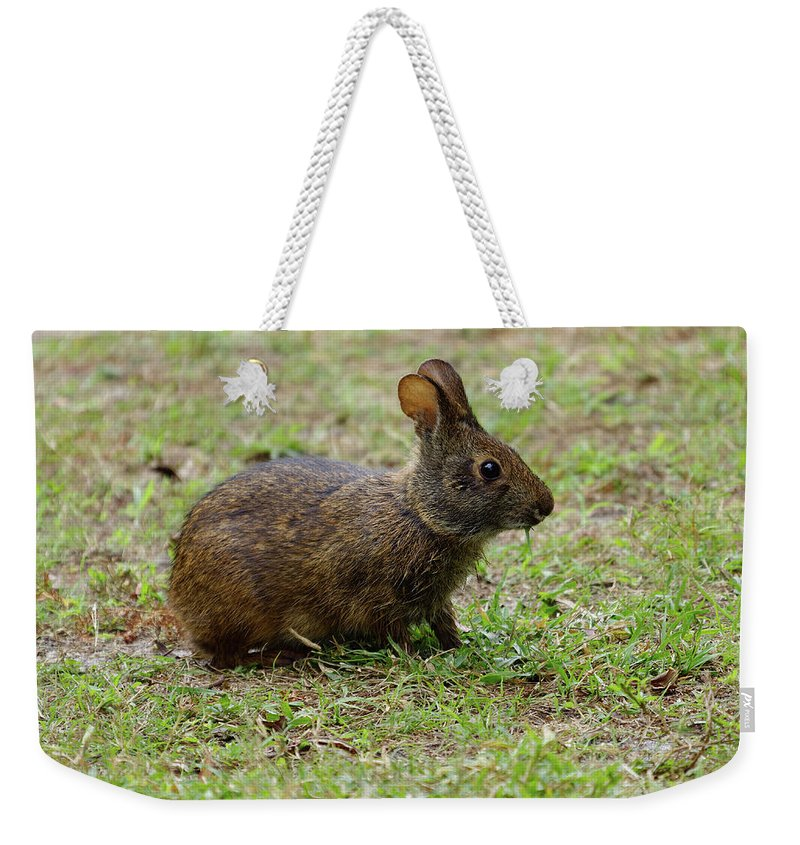 Marsh Rabbit Weekender Tote Bag featuring the photograph Wild Bunny Eating Grass by Jill Nightingale