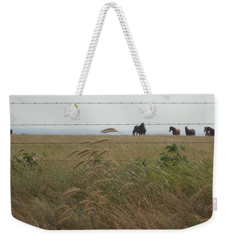 Horses Weekender Tote Bag featuring the photograph Wild Horses by Brandy Herren