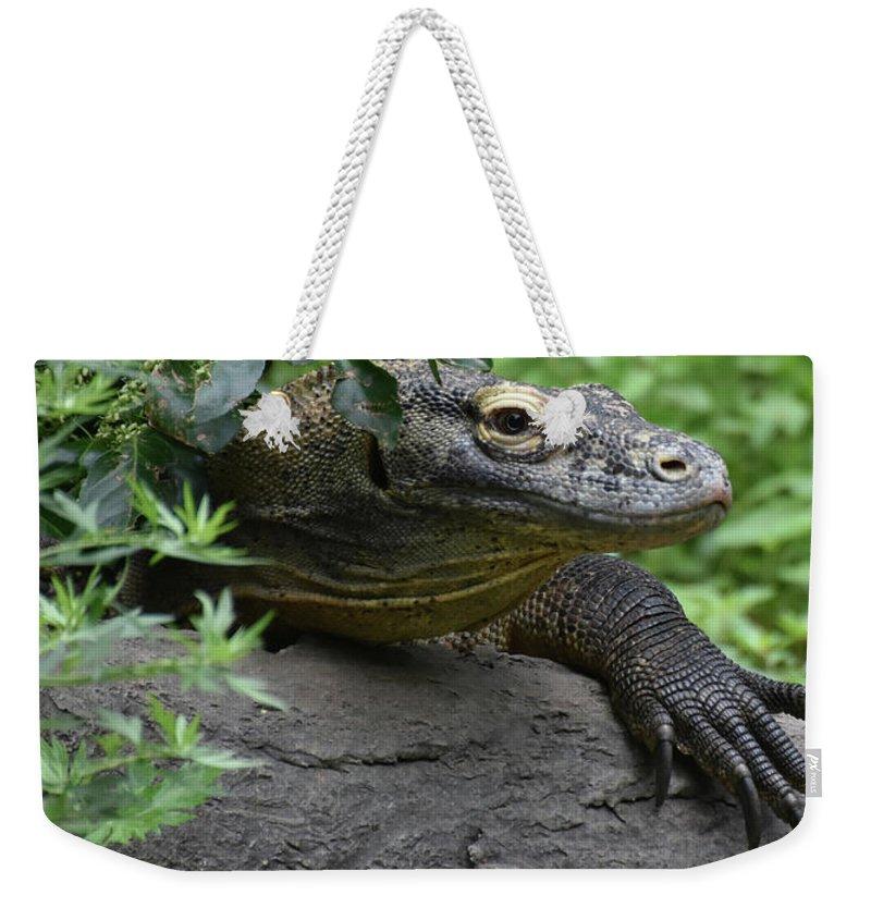 Komodo-dragon Weekender Tote Bag featuring the photograph Wild Komodo Dragon Crawling Through Nature by DejaVu Designs
