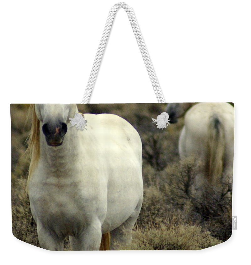 Wild Horses Weekender Tote Bag featuring the photograph Wild Stallion by Marty Koch