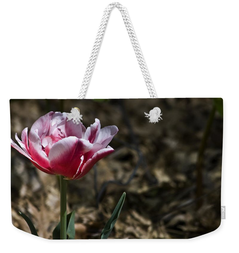 Tulip Weekender Tote Bag featuring the photograph Wild Tulip by Teresa Mucha