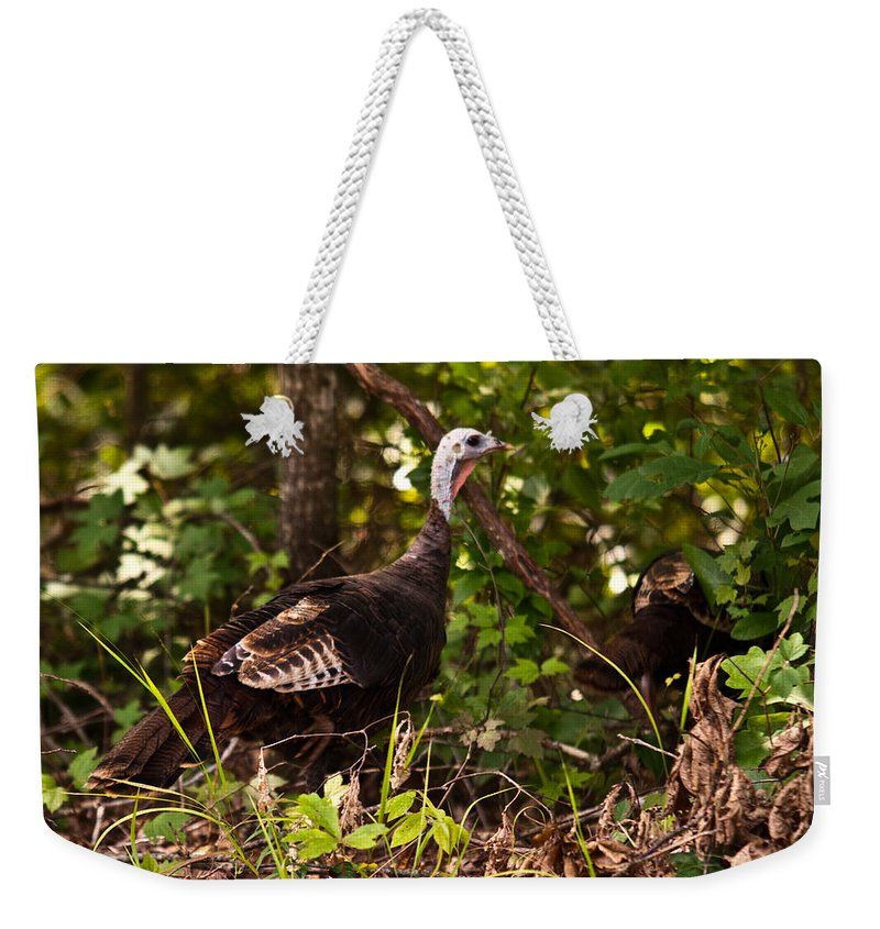 Turkey Weekender Tote Bag featuring the photograph Wild Turkey In Tennessee by Douglas Barnett