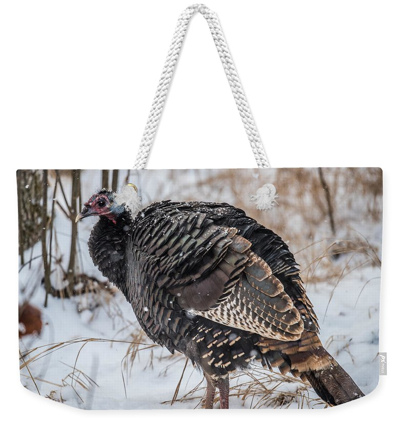 Wild Turkey Not The Whiskey Weekender Tote Bag featuring the photograph Wild Turkey Not The Whiskey by Paul Freidlund