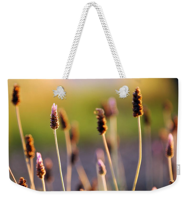 Nature Weekender Tote Bag featuring the photograph Wildflower 2 by Jill Reger