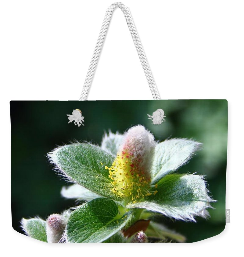 Pussy Willow Weekender Tote Bag featuring the photograph Willow Flower by Mo Barton