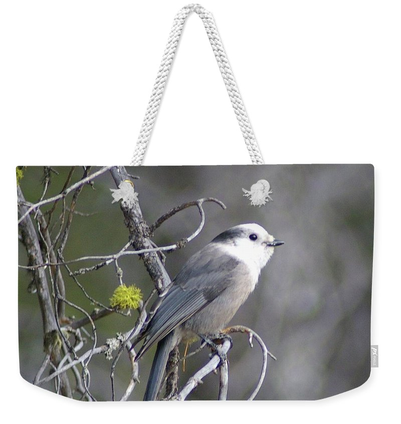 Birds Weekender Tote Bag featuring the photograph Winter Bird by Jeff Swan